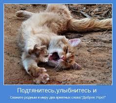Umnyj kot