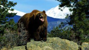 Medved' i gora