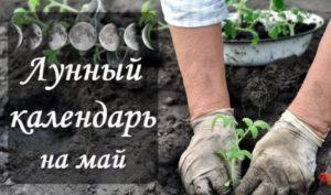 lunnyj-kalendar-goroskop-maj-2021